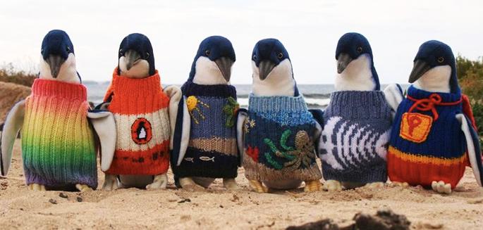 L Australien Le Plus Vieux Du Monde Tricote Des Pulls Pour Pingouins
