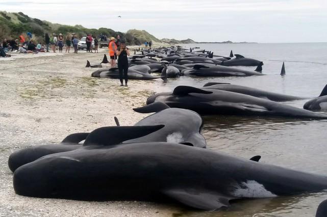 1347503-vu-nombre-baleines-mortes-on