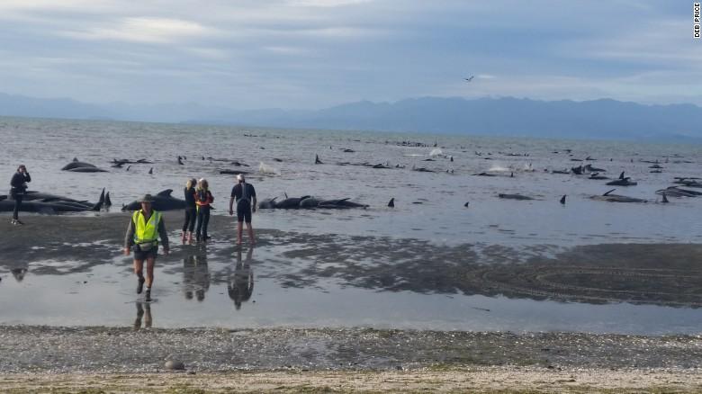170210155526-03-whale-stranding-new-zealand-exlarge-169