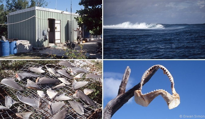 Chaque année, seuls deux îlots reçoivent des groupes de pêcheurs professionnels pendant quelques mois dans des campements très sommaires. C'est un endroit infesté de requins de toutes tailles
