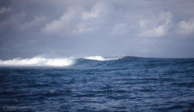 Le spot de Pointe Requin est la vague la plus consistante car la mieux exposée aux houles australes. Elle déferle en pleine mer sur un récif coralien à fleur d'eau