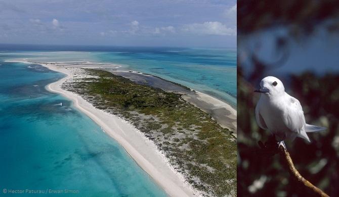 'archipel de Saint Brandon est un endroit paradisiaque et sauvage. Erwan Simon a gardé la destination secrète pendant plus de 10 ans mais le développement touristique pourrait bientôt menacer ce coin de paradis.