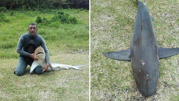 reunion requin